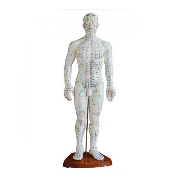 Modèle de Corps Humain Masculin pour Acupuncture 50cm.png