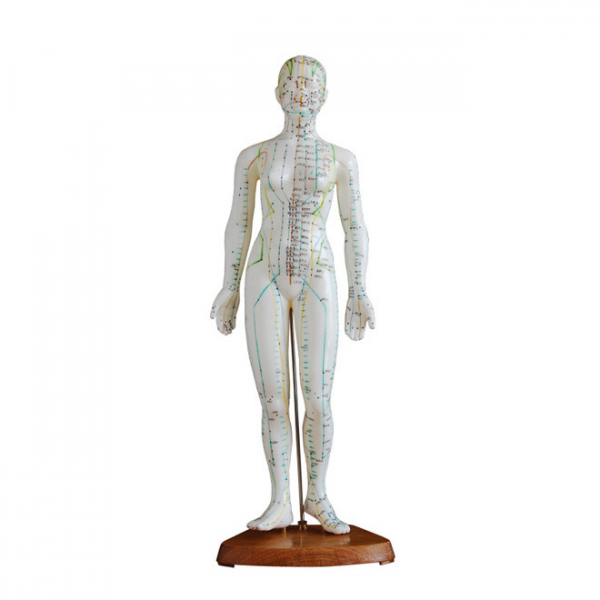 Modèle de Corps Humain Féminin pour Acupuncture 48cm .png