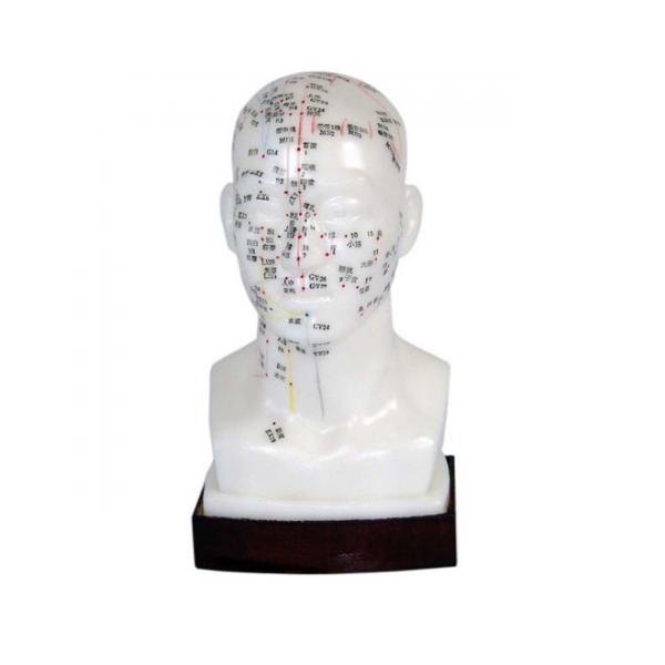 Modèle de Tête pour Acupuncture.png